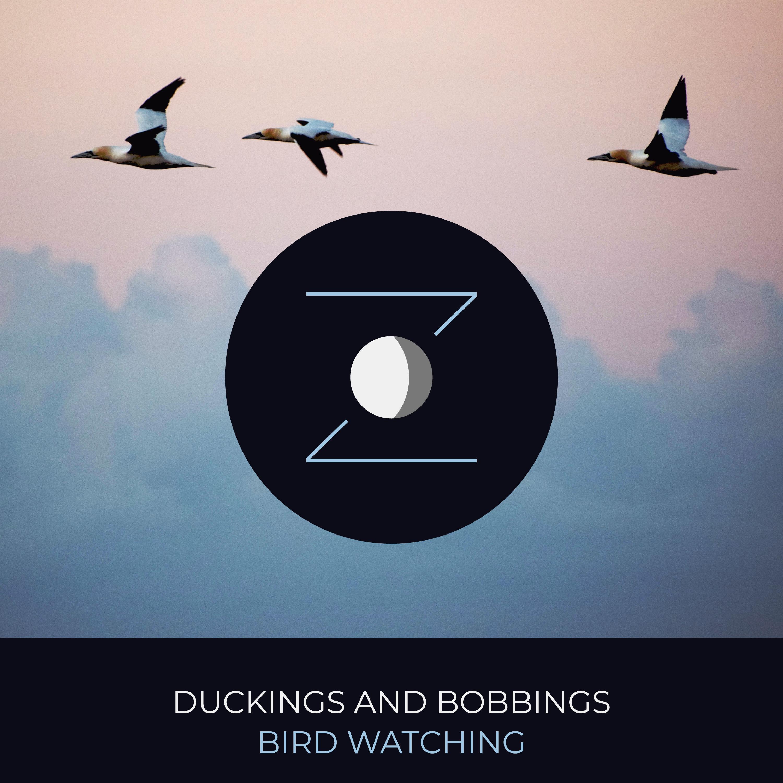 Duckings and Bobbings | Bird Watching