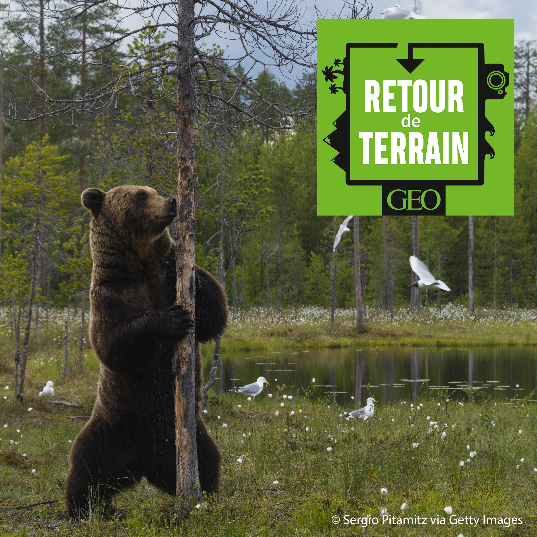 # 8 Ours, gloutons, loups... A l'affût des grands prédateurs en Finlande