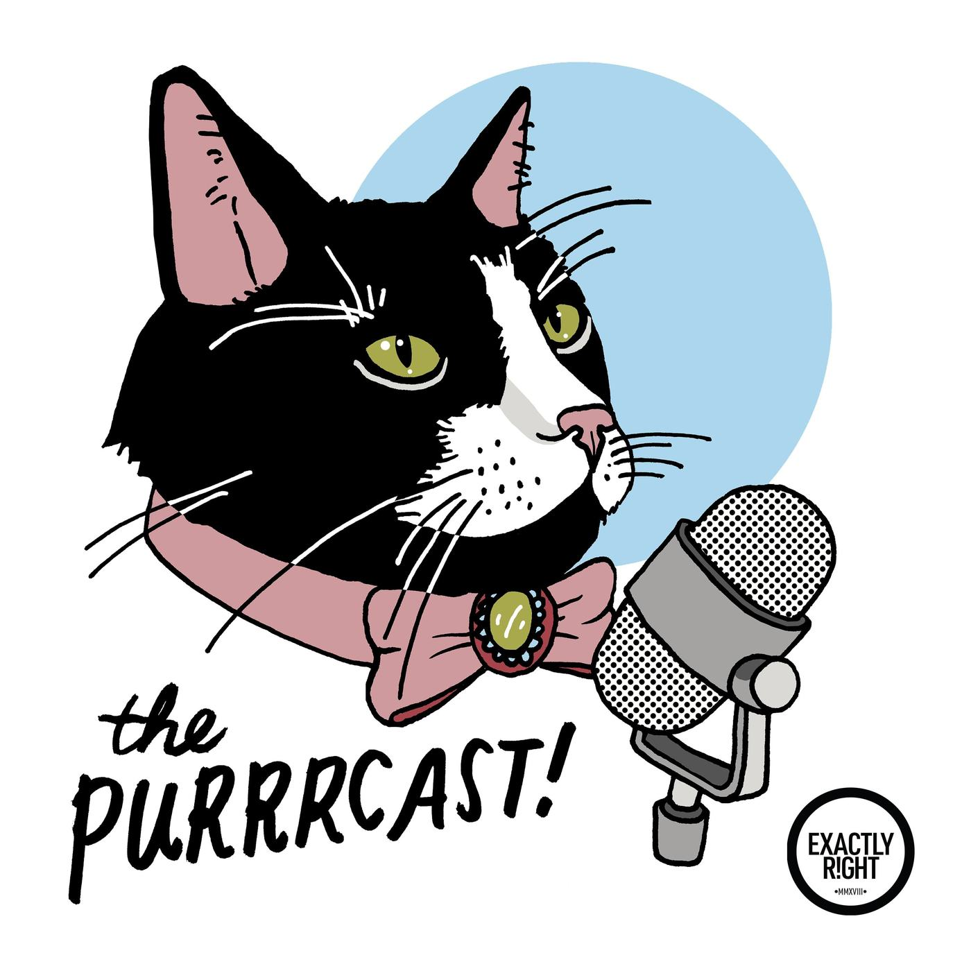 184 - The Cat Counselor (Cristin Coll) - The Status Of Cats The Purrrcast  podcast 382f775e7428