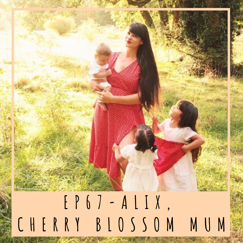 EP67- ALIX, CHERRY BLOSSOM MUM